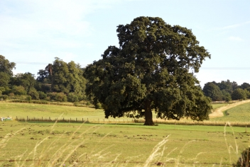 Ampthill Park Conservation and Management and Maintenance Plan