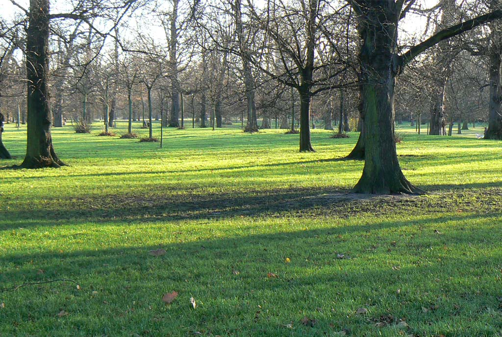 Kensington Gardens Tree Strategy