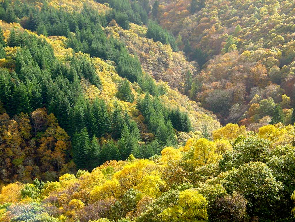 Planning for forestry and woodland