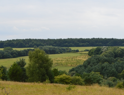 LUC Options Appraisal to improve financial sustainability for Cannock Chase AONB