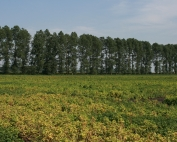 New Agricultural Landscapes: 44 years of change