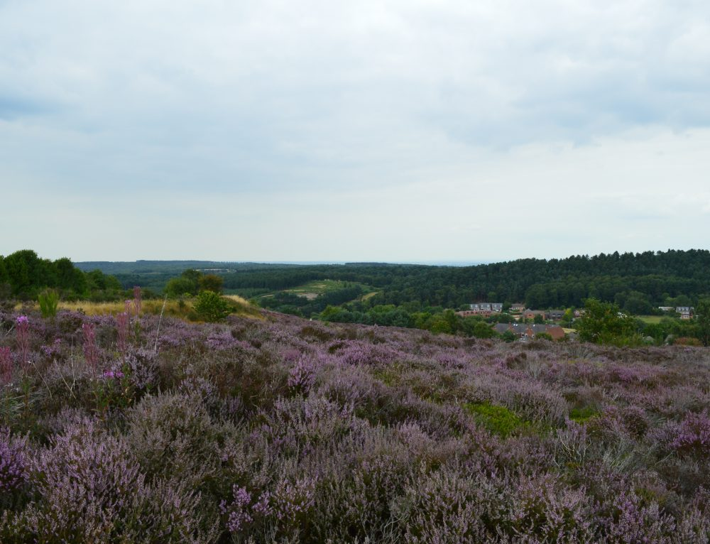 LUC wins bid to complete Cannock Chase State of the AONB report