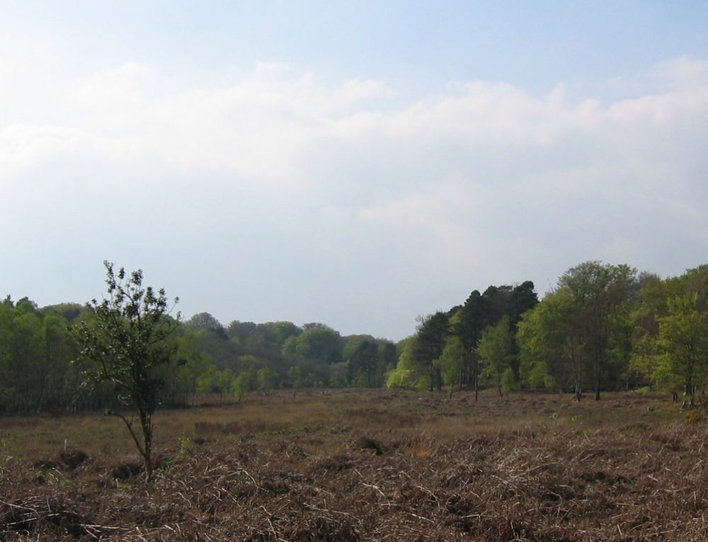 LUC helps New Forest District Council with HRA of Local Plan