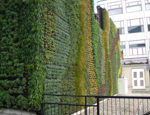 Green Infrastructure: a tool for Local Authorities in tackling the Climate Emergency